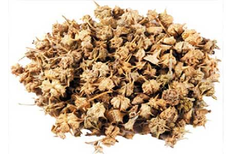 Gokshura Herb