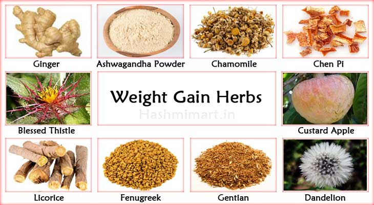 Top Herbs for Weight Gain