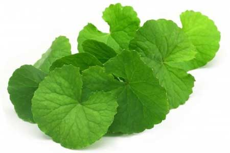 Brahmi Herbs