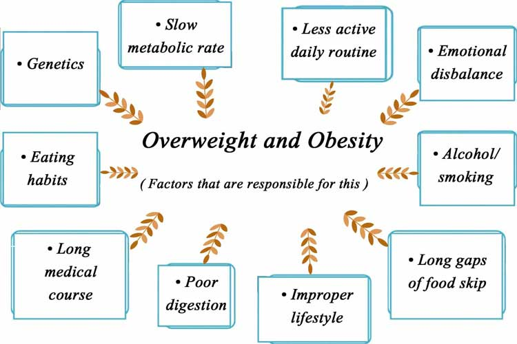 Overweight and Obesity Factors